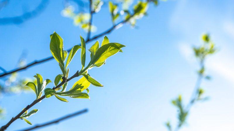 Liście na drzewach